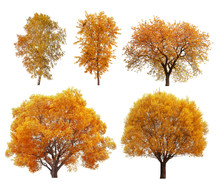 Great Collection Of Autumn Tre...