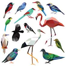 Birds-set Colorful Birds Low P...