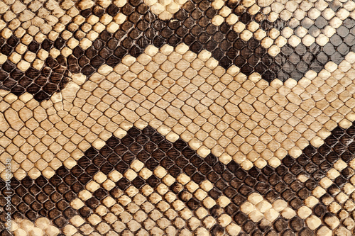 Fotografia Snake skin.
