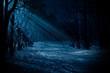 Leinwanddruck Bild - Night forest