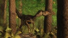 Velociraptor Dinosaur In The F...