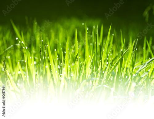 Keuken foto achterwand Paardenbloem Morning summer grass