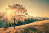 Autumn tree and sunbeam warm day landscape toned in vintage