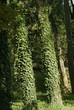 Baumbewuchs