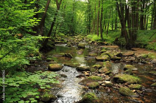 Foto auf Gartenposter Fluss river in the spring forest