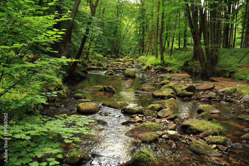Printed kitchen splashbacks River river in the spring forest