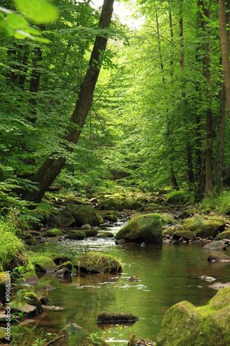 rzeka-w-lesie-wiosna