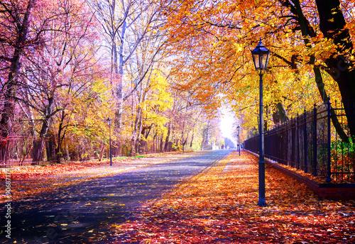 Deurstickers Herfst autumn park