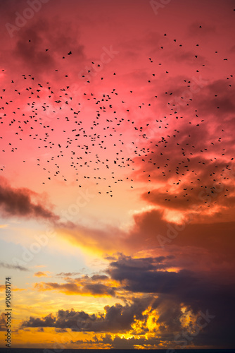 Photo  flocks of starlings flying into a red yellow sunset sky
