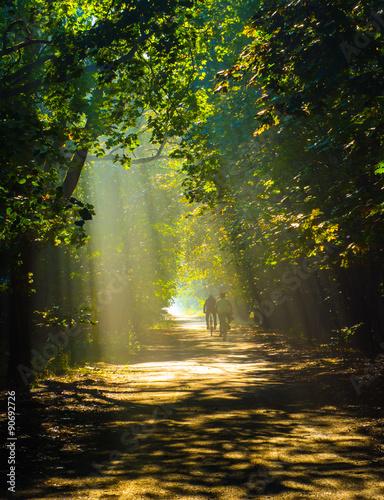 Spoed Foto op Canvas Weg in bos las rowery