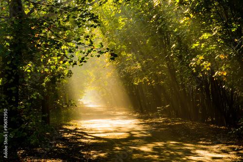 Foto op Canvas Weg in bos las ciemny