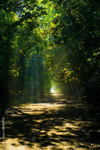 Spoed Foto op Canvas Weg in bos las ciemny