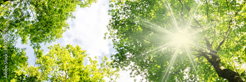 Canvas Prints Trees Warm rays of sunlight breaking through tree crowns in spring - banner