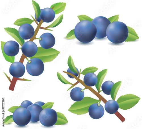 Fotografie, Obraz  Blackthorn or Sloe berries isolated on white background