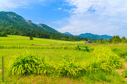 Tuinposter Lime groen Green meadow in summer landscape of Alps Mountains, Weissensee lake, Austria
