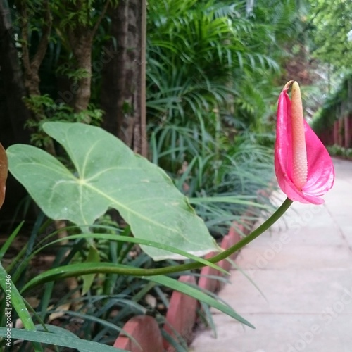 Photo Stands Camping Anthurium view