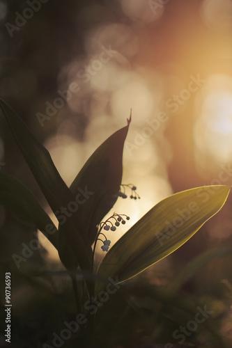 Staande foto Lelietje van dalen Lily of the Valley (Convallaria majalis) in a wood