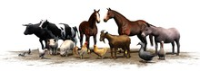 Farm Animals - Separated On Wh...
