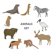 Cartoon Cute Animals Vector Set. Isolated Vector Illustration Hand-drawn Style. Sticker, Card, Print, Postcard, Poster, Background. Xerus,zebra,ibis,elk,quoll,jackal,yak,gopher,sea Lion