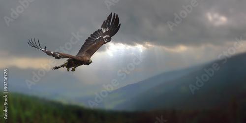 In de dag Eagle Adlerflug