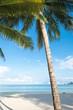 palm on beach with blue sky