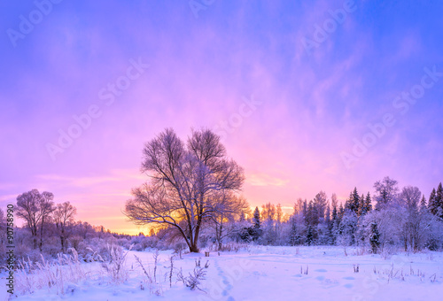 winter landscape panorama with sunset and the  forest - 90758990