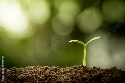In de dag Planten Young plant growing in soil on green bokeh background