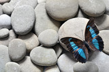 Fototapeta Rocks - Butterfly prepona laerte and stones