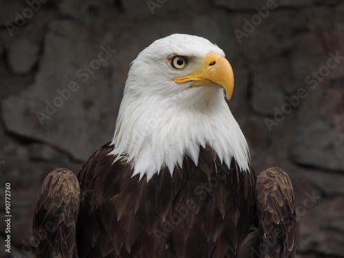 Garden Poster Eagle Pygargue