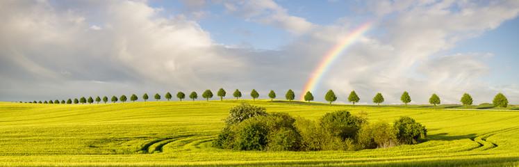 Wielobarwna tęcza po przejściu ulewy nad polem