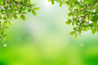 Leinwandbild Motiv natural green background with selective focus