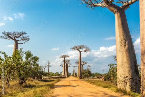 Recess Fitting Baobab Baobabs avenue