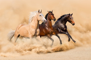 Fototapeta Koń Three horse run in desert sand storm