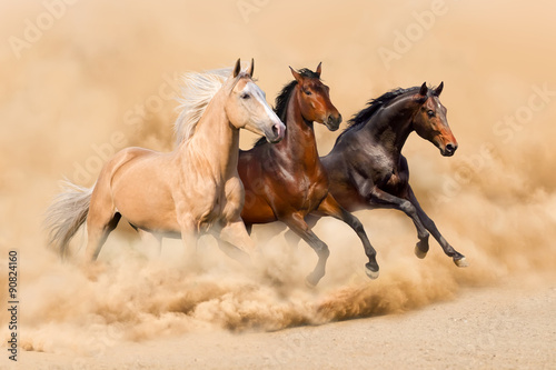 Poster Foto van de dag Three horse run in desert sand storm