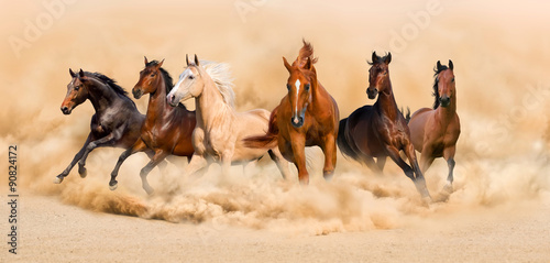 stado-koni-w-pustynnej-burzy-p