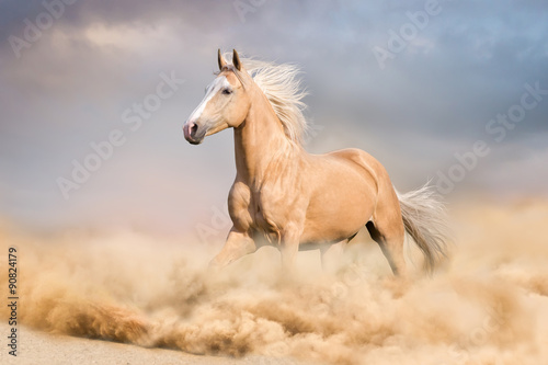 Foto op Canvas Paarden Palomino horse with long blond male run in desert