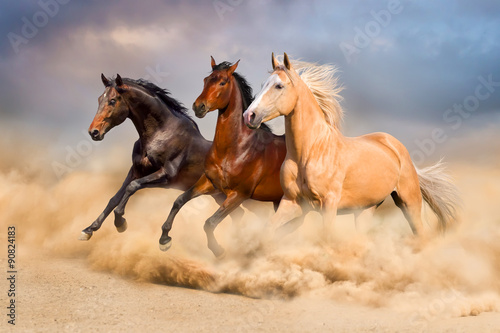 Wall Murals Photo of the day Horse run