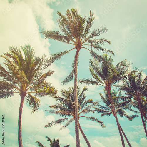Tuinposter Palm boom coconut palm tree and blue sky clouds with vintage tone.