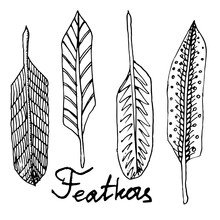 Hand Drawn Ink Black And White  Vector Feathers Set For Your Design And Decoration.