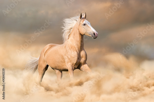 Wall Murals Photo of the day Palomino horse with long blond male run in dust