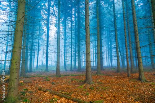 Mystischer Wald im nebel in blau und orange