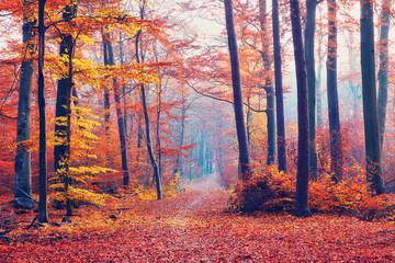 FototapetaFoggy autumn forest