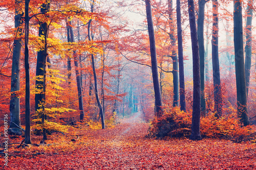 Photo Stands Road in forest Foggy autumn forest