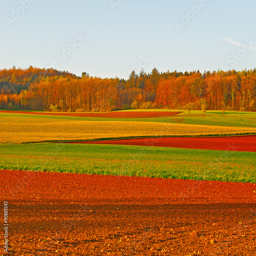 Foto op Canvas Rood traf. Fields