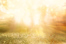Zoom Lens And Golden Light Burst Among Trees. Abstract Blurred Photo