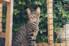 Alert Young Tabby Cat Sitting In Front Of Fence In Garden.