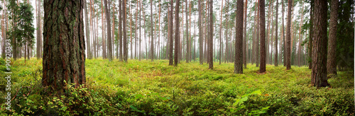 Lahemaa national park forest panorama Canvas Print