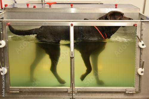 Vászonkép Hundephysiotherapie