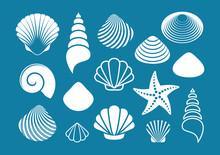White Sea Shells And Starfish