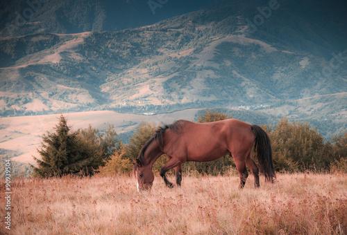 Photo sur Toile Elephant Horses grazing in pasture in mountains. Autumn landscape.